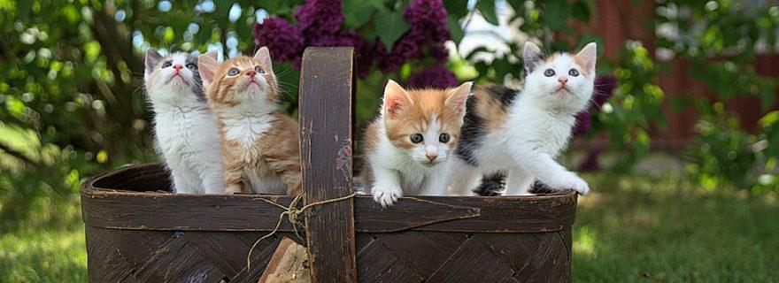 Academisch leiderschap: soms katten en poezen bij elkaar houden
